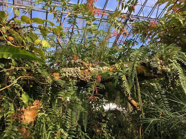 edimbourg royal botanic garden glasshouses