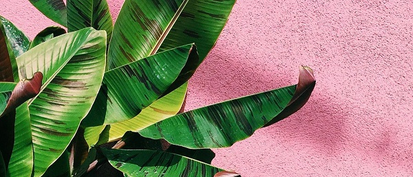 green plants on pink