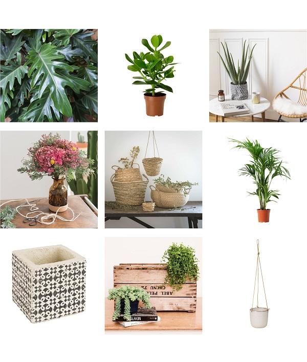 kinfolk shopping green plantes bergamotte ikea maisons du monde