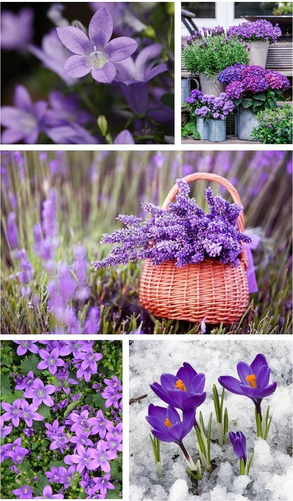 pantone couleur ultra violet fleurs