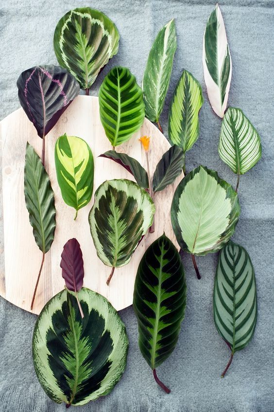 tendance deco green plantes a motifs
